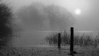 A grey shot. Mist over water as the sun tries to shine through. Trees and branches are surrounded by water.