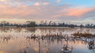A cloudy pink sky overlooks a flooded field. Frosted vegetation pokes up out of the water.