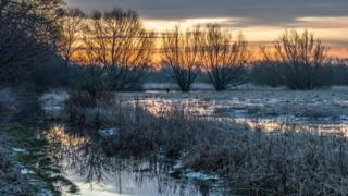 A frozen wet field. An orange and yellow sky behind trees as the sun rises.