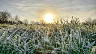 A close up of frosted grass in the foreground. Sun is shining behind.