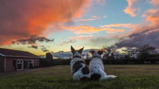 Two small dogs sit side by side, with their backs to the camera, looking out at the orange, yellow clouds in a blue sky.