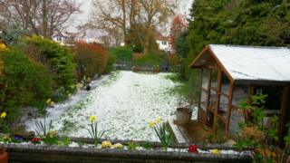 Grass and flowers in a garden are white with hail stones.