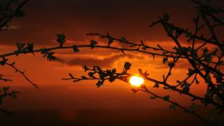 Branches in the foreground. The sun is setting in an orange and gold sky behind.