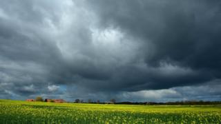 Grey clouds over a yellow field.