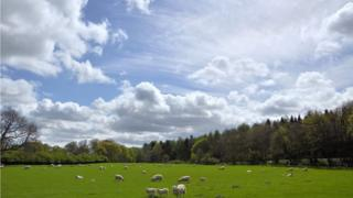Light blue sky with scattered clouds, a vast green field with sheep grazing and tall green trees surrounding the field.