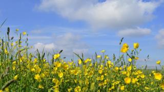 Bright blue sky with a few white clouds, buttercups and greenery in the foreground.