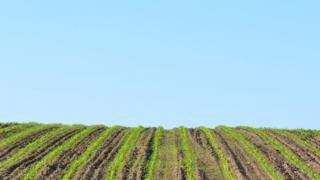 Clear blue sky with a hill of a ploughed field in the foreground.