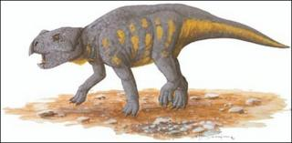 An artist representation of a ceratopsian