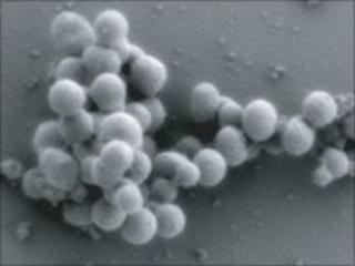 Synthetic bacterial cells