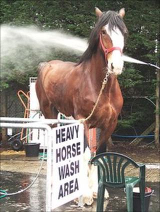 Horse at the Royal Highland Show (Pic: Laura Thurso)