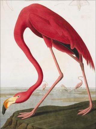 Sketch taken from The Birds of America, 1827–1838 - courtesy of Sotheby's