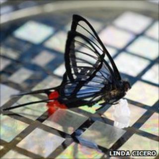 Butterfly on sensor array