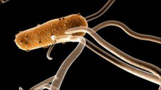 Salmonella bacterium. Computer artwork. Pic by Science Photo Library