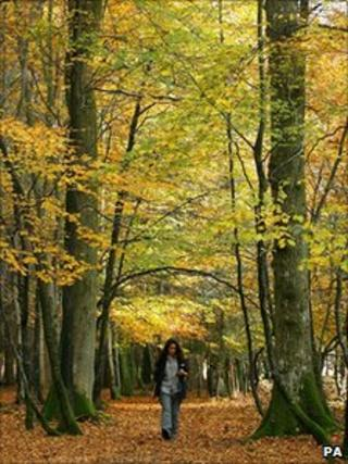 A person walking in a wood (generic)