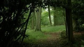 Haycroft Wood, near Swyncombe, Oxfordshire, in England