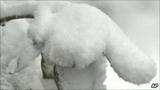 Magnolia covered in snow