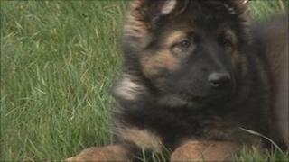 One of the police puppies