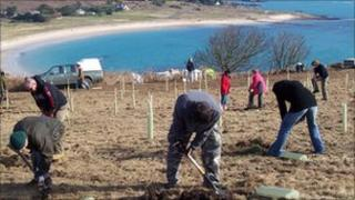 Tree planting in Alderney