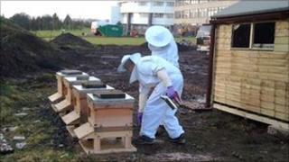 Bee hives at Ninewells Hospital