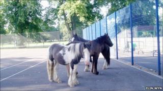 Horses (Photo courtesy Elin Wyn)