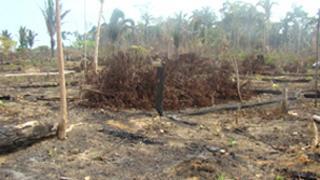 Nilcilene's crops were burned