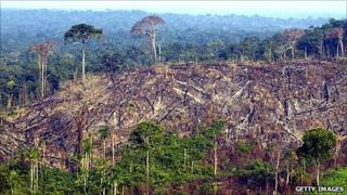 Deforested sector of the Amazon rainforest