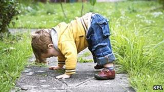 A toddler playing in the garden