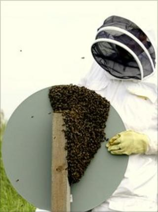 Bee keeper and swarm of bees