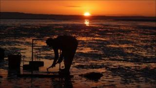 A cockle fisherman early in the morning on the Dee Estuary