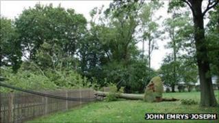 Fallen tree on power line