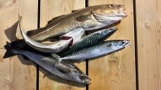 Fish - generic