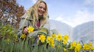 The early daffodils and an Eden Project horticulturist