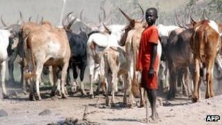 A South Sudanese boys herds cattle in Jonglei state (Archive shot)