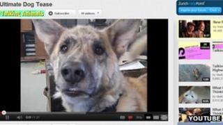 Dog tease on YouTube