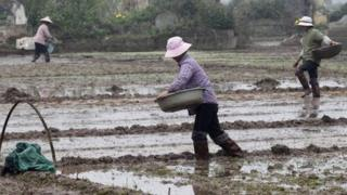 File image of farmers throwing seed in Chuong Loc village, south of Hanoi, on 14 January 2012