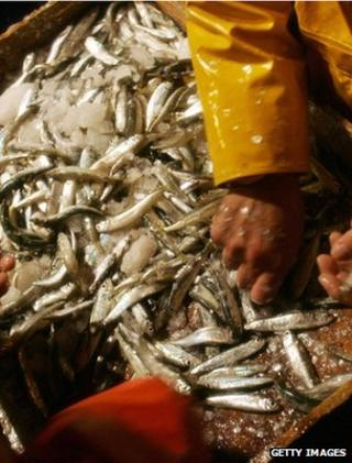 Fishermen sorting a catch (Getty Images)