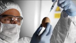 Bird flu research