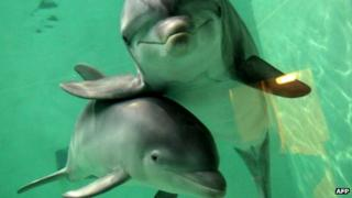 Two dolphins at a zoo in Duisburg, Germany