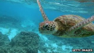 File photo: Great Barrier Reef