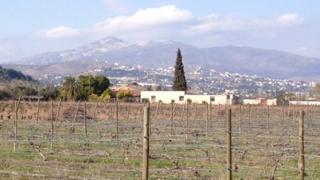 The vineyards of Dimitrios Georgas