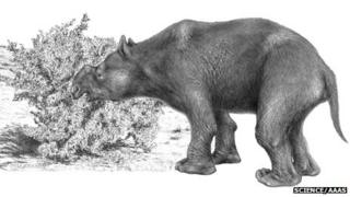 An extinct marsupial mega-herbivore