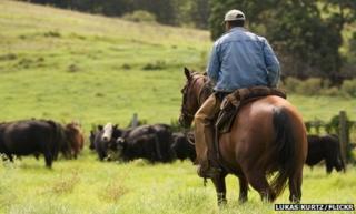 Cowboy in South Maui, Kula Highway
