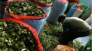 A man fills bags with coca leaves in La Paz, Colombia (file image)