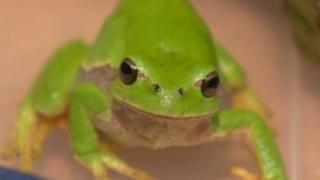 Riverford the tree frog