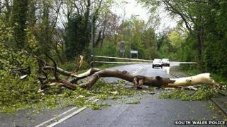 A tree blocked this road in Dinas Powys in the Vale of Glamorgan Photo: South Wales Police