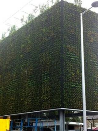 The vertical garden which has sprung up on the new Skainos building in east Belfast