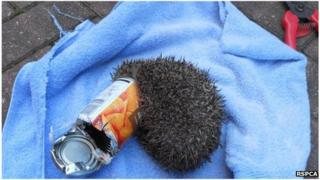Hedgehog in carrot tin