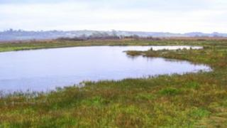 A pond colonised by pillwort