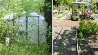Before and after picture of greenhouse at Penrhyn Castle