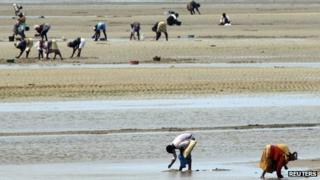 Women collect clams on the Indian Ocean shore line in Maputo September 2010